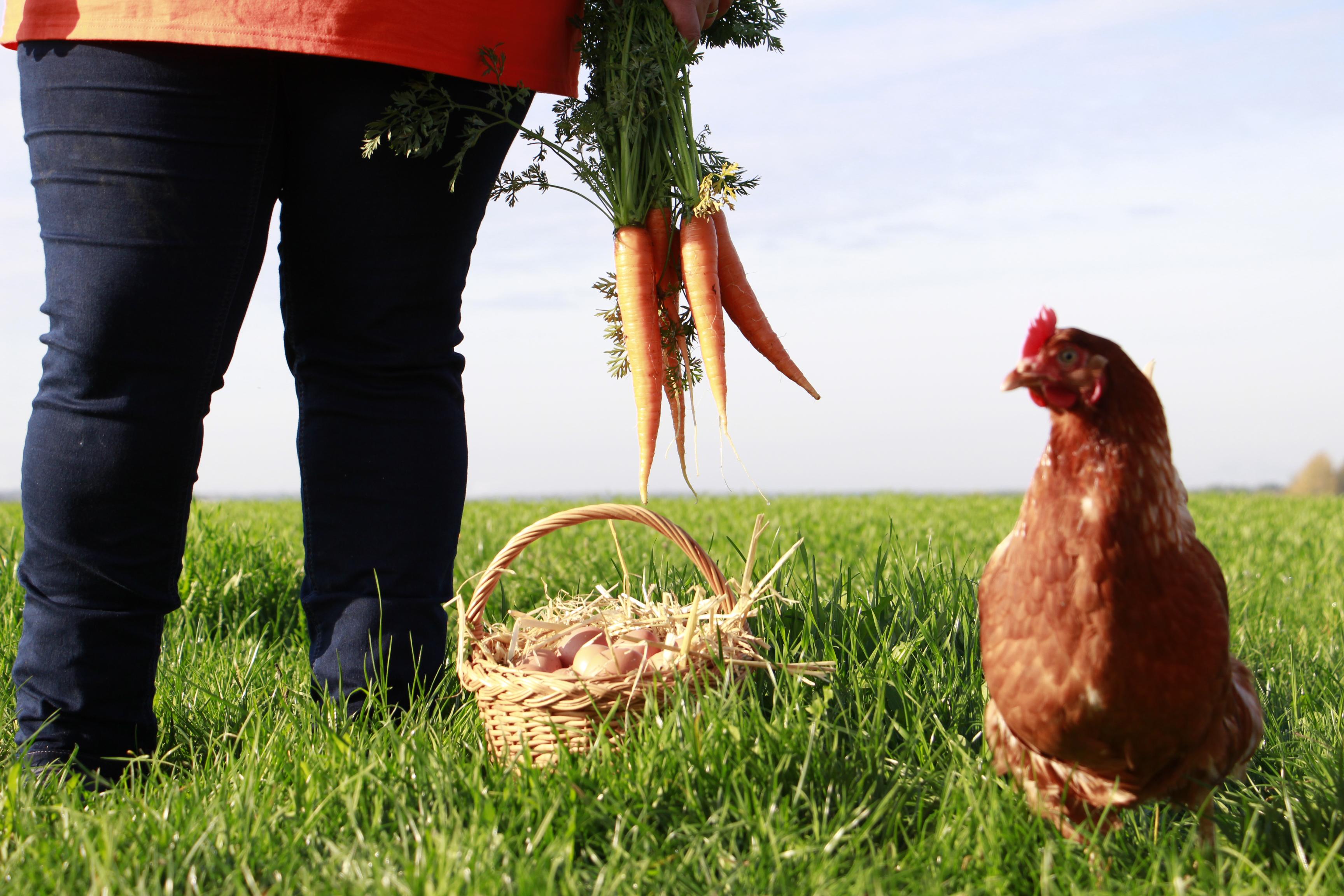 24 Stunden rund um die Uhr frische Eier aus Freilandhaltung